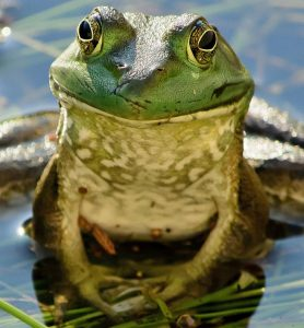 It's a fine line between a prince--er, noble, that is--and a frog. A very fine line.